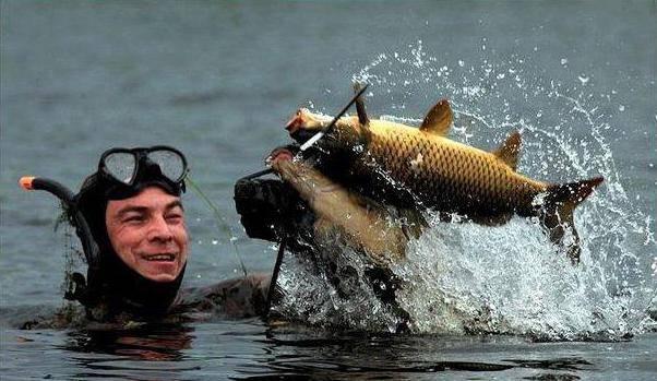 Подводный арбалет своими руками