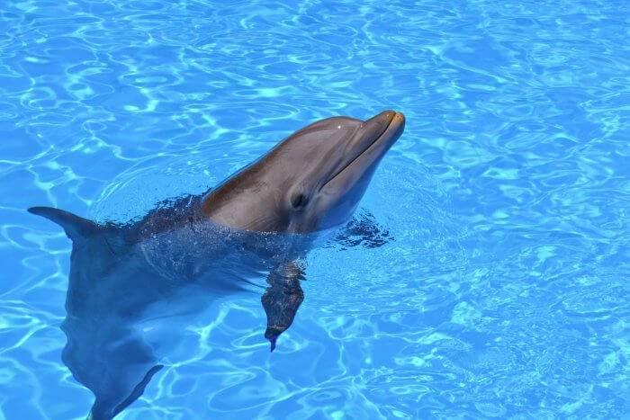 Обучение ребенка плаванию в бассейне