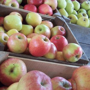 Пищевая ценность яблока