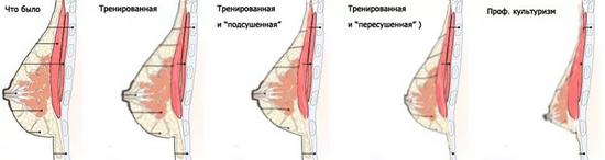 Как раскачать грудные мышцы в домашних условиях
