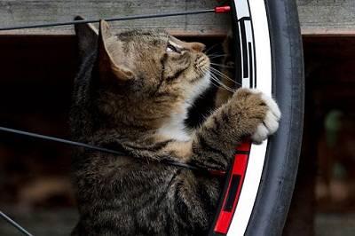 Как сделать мопед из велосипеда