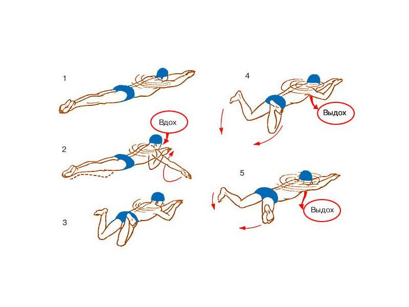 Плавание мышцы