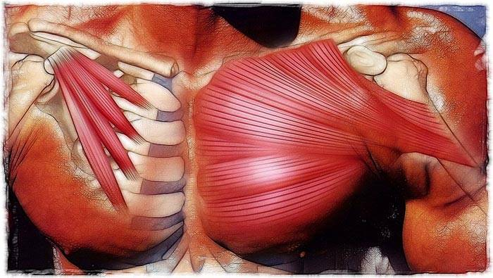 Как быстро накачать грудь в домашних условиях