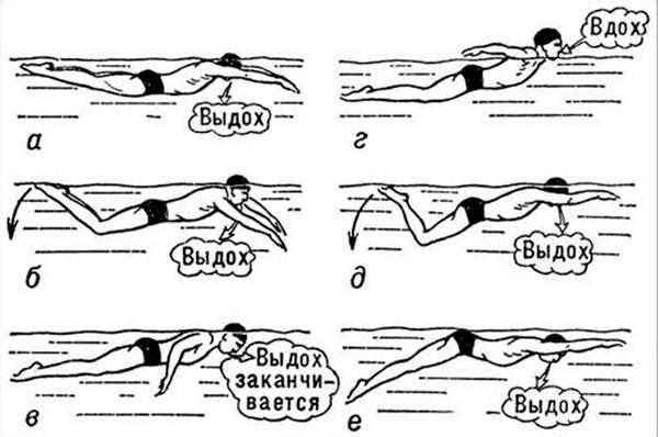 Как научить взрослого плавать