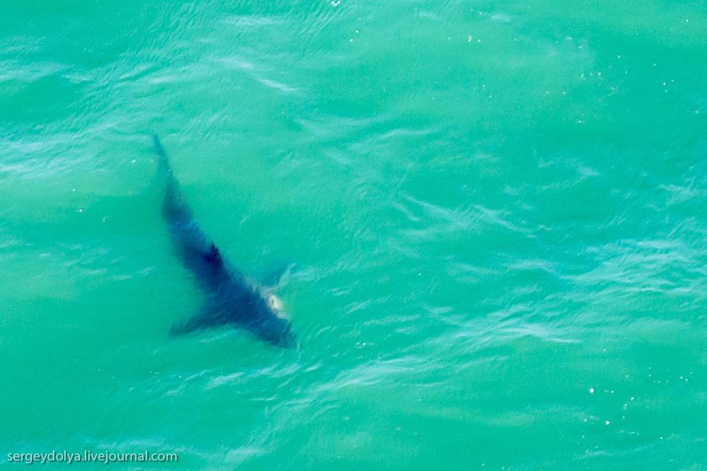 Погружение в клетке к акулам