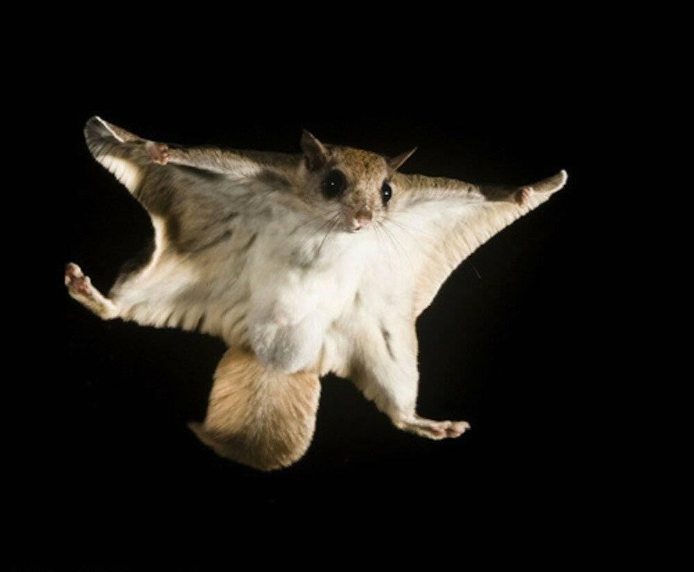 Костюм белки летяги для прыжков